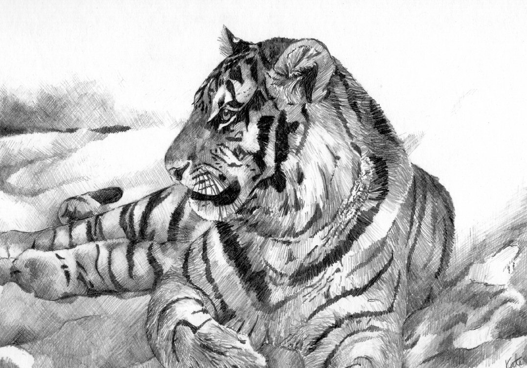 a study of the tiger A fundamental study analyzed the low frequency and infrasonic calls of tigers, as previous studies had only focused on calls within the human hearing range (muggenthaler et al 2000.